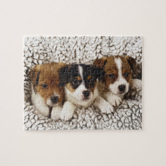 Litter of puppies jigsaw puzzle