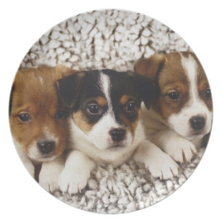 Litter of puppies plate