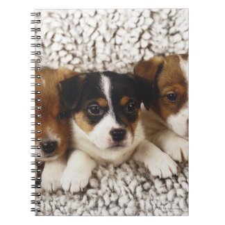 Litter of puppies spiral notebook