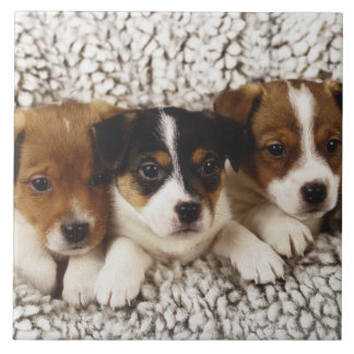 Litter of puppies tile
