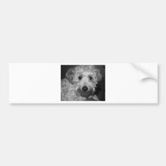 Little Awesome Abby the Yorkie Poo 2 Car Bumper Sticker