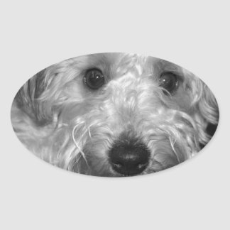 Little Awesome Abby the Yorkie Poo 2 Oval Sticker