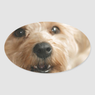 Little Awesome Abby the Yorkie Poo Oval Stickers