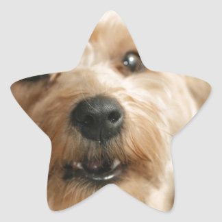 Little Awesome Abby the Yorkie Poo Star Sticker