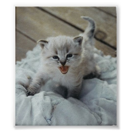 little baby kitten poster