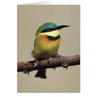 Little Bee-eater Card