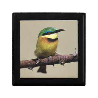Little Bee-eater Gift Box
