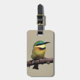 Little Bee-eater Luggage Tag