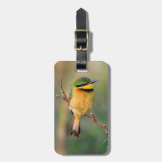 Little Bee-Eater Perching On A Branch, Maasai Luggage Tag