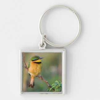 Little Bee-Eater Perching On A Branch, Maasai Silver-Colored Square Key Ring