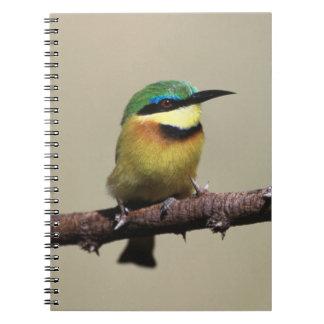 Little Bee-eater Spiral Notebook