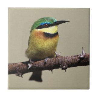 Little Bee-eater Tile