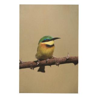 Little Bee-eater Wood Wall Art
