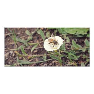 Little Bee Photo Print