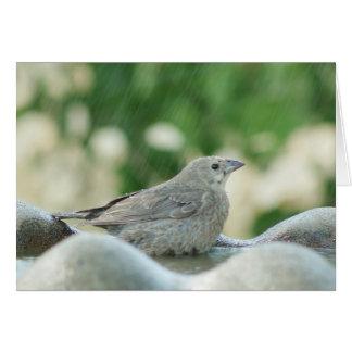 Little Bird in Bird Bath Greeting Cards