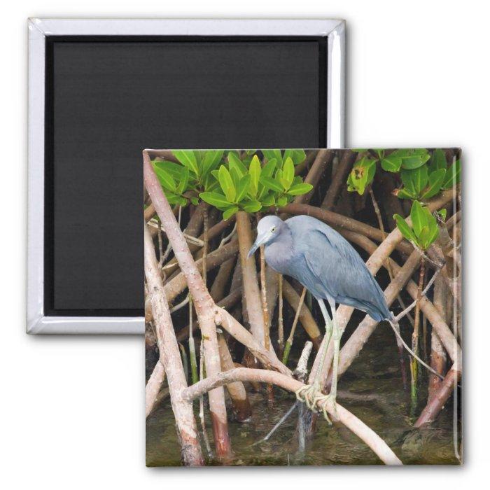 Little Blue Heron Magnet
