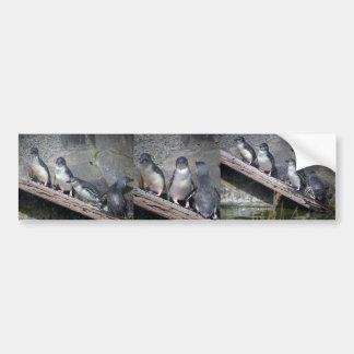 Little Blue Penguins Bumper Sticker