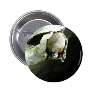 Little brown bat affected by White-nose syndrome 6 Cm Round Badge