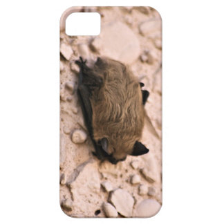 Little Brown Bat iPhone 5 Case