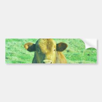 Little Brown Cow in Pastel Green Grass Bumper Sticker