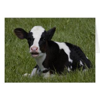 Little Calf Card