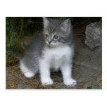 little cat Bondu Postkarte