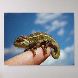 Little Chameleon Poster
