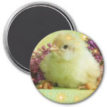 little chicken 7.5 cm round magnet