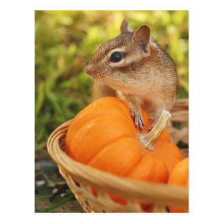 Little Chipmunk with Pumpkin Postcard