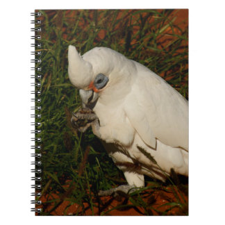 Little Corella Notebook