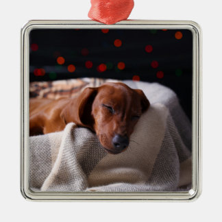Little Cute Dachshund Puppy On Christmas Christmas Ornament