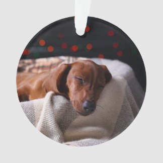 Little Cute Dachshund Puppy On Christmas Ornament