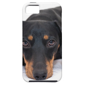 Little Dachshund iPhone 5 Case