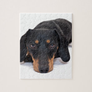 Little Dachshund Jigsaw Puzzle