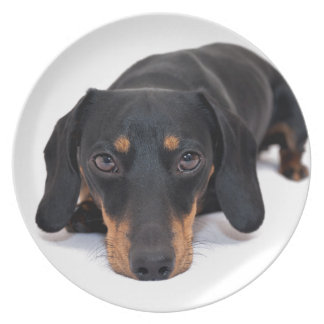 Little Dachshund Plate