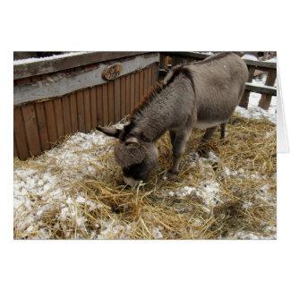 Little Donkey Christmas Card