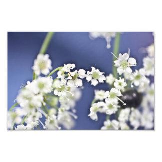 Little Flowers Photo