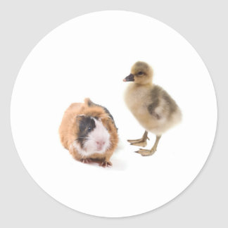 little goose and guinea pig classic round sticker