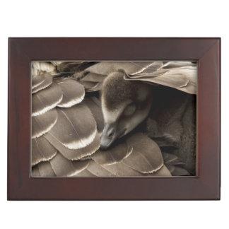Little gosling all tucked in under mum's wing keepsake box