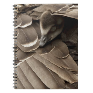 Little gosling all tucked in under mum's wing notebooks
