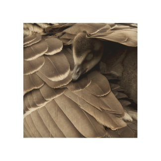 Little gosling all tucked in under mum's wing wood wall decor