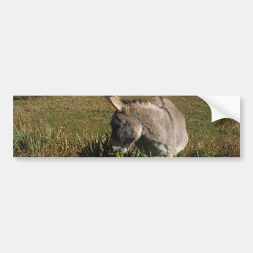 Little gray Donkey w / wildflowers Bumper Sticker