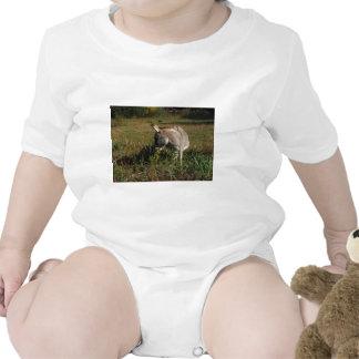 Little gray Donkey w / wildflowers Baby Creeper
