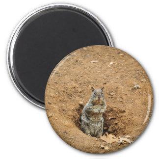 Little Gray Squirrel 6 Cm Round Magnet