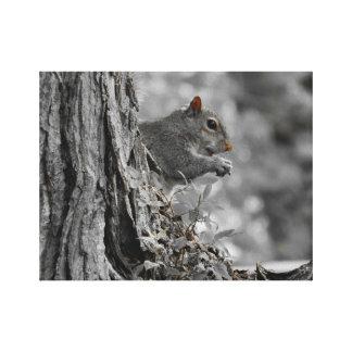 Little Gray Squirrel Canvas Print