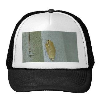Little Green Frog Animal Trucker Hats