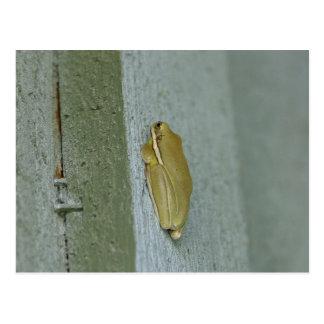 Little Green Frog Animal Postcard