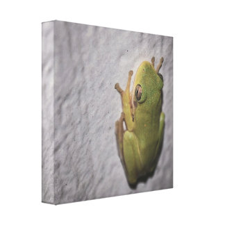 Little Green Frog Stretched Canvas Print