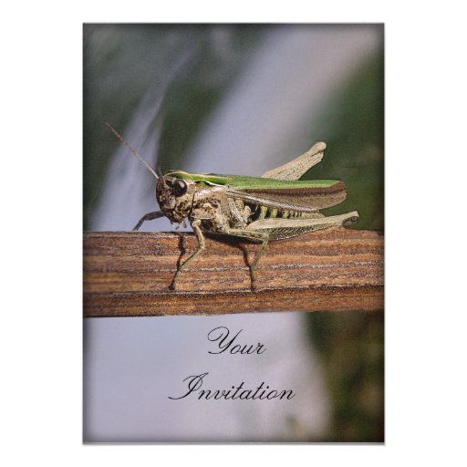 Little Green Grasshopper Party Event Invitations