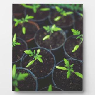 Little Growing Plants Plaques